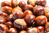 Chestnut Close Up Shoot