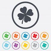 picture of red clover  - Clover with four leaves sign icon - JPG
