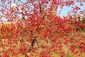 Red berries on tree.