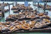 Sealions, Pier 39, Fisherman's Wharf