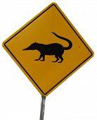 Coatis / animals crossing road sign. White background.