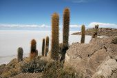 Incahuasi Island In Middle Of Uyuni Salt Flats