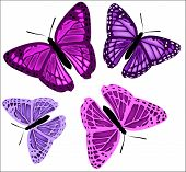 Set Of Butterflies Of Different Colors On A White Background