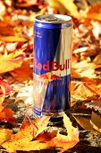 Montreal, CANADA - October 13, 2014: Can of Red Bull in autumn leaves.