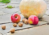 Pumpkin, Apples And Walnuts In The Garden