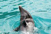 Lazy Dolphin