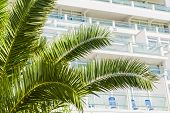 The hotel's balconies seen behind palm leaves.