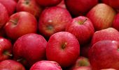 stock photo of fruit-juice  - cluster of farm fresh red delicious apple fruit - JPG