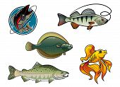 image of flounder  - Five cartoon colored fish characters - JPG