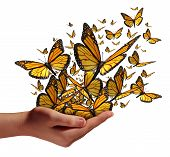 pic of spread wings  - Hope and freedom concept as a human hand releasing a group of butterflies as a symbol for educationcommunication and spreading ideas with social marketing isolated on a white background - JPG