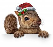 Holiday Squirrel