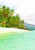 Dream Bay Jungle
