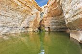 Sandstone canyon walls form round bowl. Thin jet waterfall form cold lake. Canyon Ein Avdat in Israel