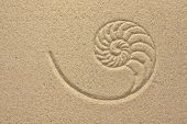 Nautilus Shell Pattern In Sand