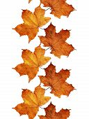 Fall Leaves Line
