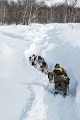 Traditional Kamchatka Dog Sledge Race