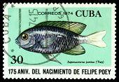 Vintage  Postage Stamp. Eupomacentrus Partitus.