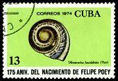 Vintage  Postage Stamp. Hemitrochus Fuscolabiata.