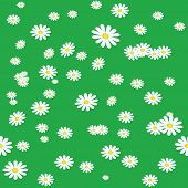 Seamless daisies background