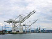 Harbor container cranes