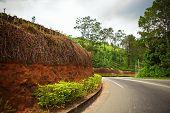 Winding road along the tea plantations