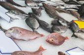 stock photo of piraeus  - Fish on ice in the market - JPG