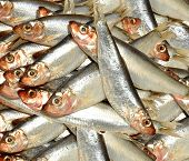 Fresh Fish Sprat Background