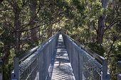 Tree Top Walk bridge in the Valley of the Giants