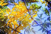 Autumn Leaves Of Blue Sky With Sun Rays