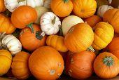Autumn squash and pumpkins
