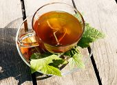 Black currant herbal tea in cup, sunny day