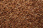 Buckwheat Seed Background Close Up