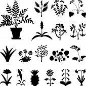 Set of stylized houseplants' silhouettes.
