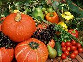 Fresh organic pumpkins