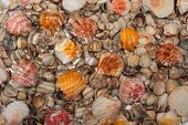 Seashells Under Water During Rain