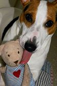 pic of toy dog  - dog playing with his toy - JPG