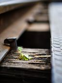 Small Life On A Railway