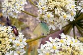 A Large Green Beetle And Butterfly