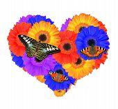 Heart from gerbera flowers
