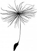 stock photo of dandelion seed  - illustration with single dandelion seed  silhouette isolated on white background - JPG
