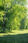 image of tree trim  - fresh green trees near trimmed meadow in summer park - JPG
