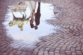 picture of paved road  - Bride and groom reflected in slop on paved road - JPG