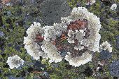 picture of lichenes  - Colorful nature pattern - JPG