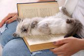 stock photo of lovable  - Young woman holding cat and old book - JPG