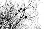 Birds_Silhouettes