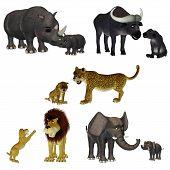 toon safari