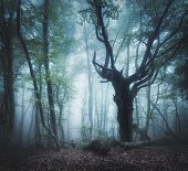 Постер, плакат: Mystical Autumn Forest In Fog In The Morning Old Tree