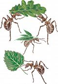 illustration with ants and leaves isolated on white background