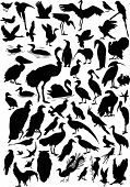 illustration with different bird silhouettes collection isolated on white background