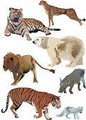 collection of animals inclusive polar fox, lion, polar bear, wild boar, cheetah and tigers